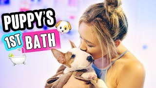 Download PUPPY'S FIRST BATH TIME! Video