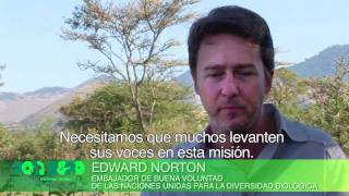 Download United Nations Decade on Biodiversity - Official Video (Spanish) Video