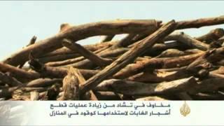 Download مخاوف في تشاد مـن زيادة عمليات قطـع الأشجار Video