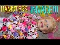 Download HAMSTERS INVADE THE HOUSE!!! Video