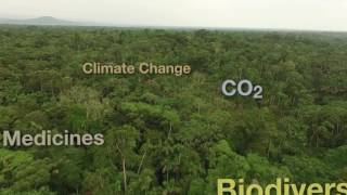 Download Tropical Rainforests Sustainable Management preview Video