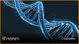 Download The Stream - Science and security of DNA testing Video
