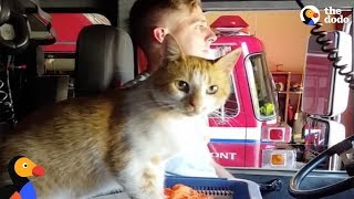 Download Stray Cat Shows Up At Fire Station And Moves Right In With Firefighters | The Dodo Video