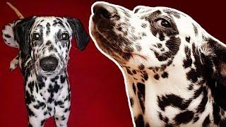 Download Köpeğimle Saklambaç Oynadık Video