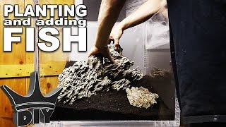 Download PLANTING and ADDING FISH to my aquarium Video
