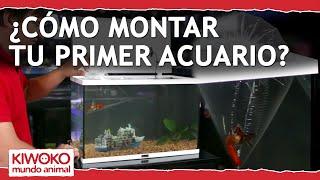 Download Tutorial para montar tu primer acuario Video