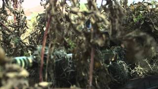 Download Sniper: Legacy - Trailer Video