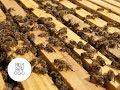 Download Keičiame bičių motinėles Video