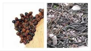 Download Spiders, Snakes, Insects, and Other Ectotherms in the Winter Video