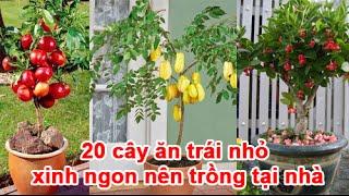 Download 20 cây ăn trái nhỏ xinh ngon nên trồng tại nhà Video