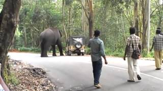 Download elephant attack in kerala 2015 Video