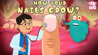 Download How Your Nails Grow? | The Dr. Binocs Show | Best Learning Videos For Kids | Peekaboo Kidz Video
