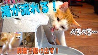 Download 滝が流れる給水機買ってみたら猫たちが興奮のあまり駆け回る!? Video