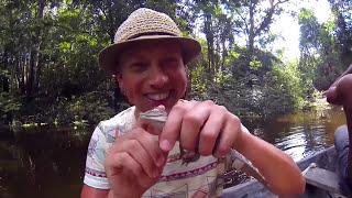 Download Amazon Rainforest Animals Wildlife Video