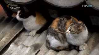 Download 다큐프라임 E76 인간과 고양이 1부 고양이 별 Video