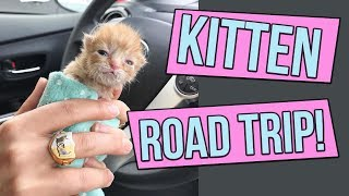 Download How to Road Trip with Kittens! Video