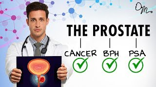 Download WHAT IS THE PROSTATE? | BPH + Cancer + PSA + More! | Doctor Mike Video
