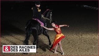 Download Spectacle du Cadre Noir, élite de la cavalerie française Video