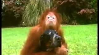 Download Bestest Buddies: Orangutan and Hound Dog (must see!) Video