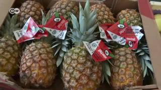 Download Start-up macht Fruchtpapier aus Obst für den Müll | Wirtschaft Video