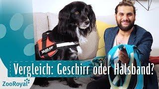 Download Vergleich: Geschirr & Halsbandtypen | Rund um den Hund mit Masih Samin | ZooRoyal Video