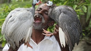 Download Guineafowl Curry Prepared by my DADDY ARUMUGAM / VILLAGE FOOD FACTORY Video