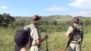 Download Lion stalking us on first walking safari (don't turn your backs) Video