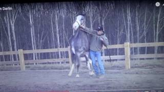 Download Dangerous Horse Handling - Me Hating On Men In The Horse World - He Was Probably Trained By A Woman Video