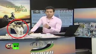 Download Stray kitten crashes live news broadcast in Turkey, finds warm laptop to sit on Video