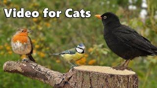 Download Cat TV : Garden Birds Galore ONE HOUR Video