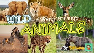 Download Wild Animals l สัตว์ป่า l คำศัพท์ภาษาอังกฤษ Video