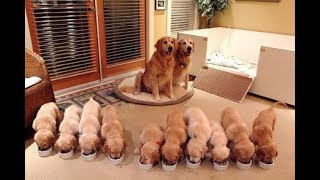 Download Cutest Puppies! Mother Dogs and Cute Puppies Videos Compilation, Cute moment of Puppy #2 Video