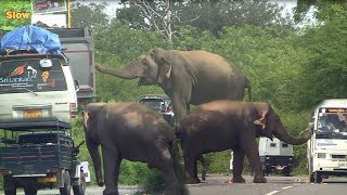 Download Lonely elephant waiting for food ! Video