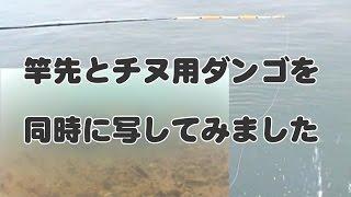 Download 『竿先&水中映像』おためし版【釣りの水中映像】Testcase of Fishing Rod and Underwater Video