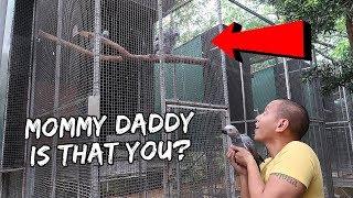 Download My Pet Baby Bird Meets Her Biological Parents   Vlog #248 Video