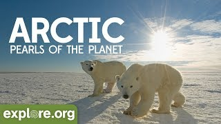 Download The Arctic - Documentary Film | Pearls of the Planet Video