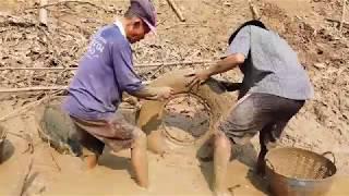 Download จับปลาที่มุดซ่อนในโคลนหลังสูบสระเสร็จทั้งปลาช่อนปลาดุก-Catching mud fish a lot Video
