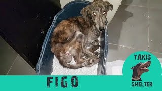 Download Watch this very skinny stray dog giving hugs to his rescuer every day - Figo - Takis Shelter Video