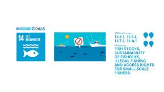 Download SDG 14 - Indicators of fish stocks, sustainability of fisheries, and illegal fishing Video