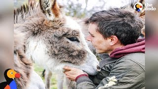 Download Guy Gives Up EVERYTHING To Save Animals | The Dodo Video