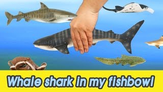 Download [EN] #53 Let's raise Whale shark in my fishbowl! kids education, Animals animationㅣCoCosToy Video
