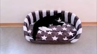 Download Katzenbett selber machen! DIY cat bed Video
