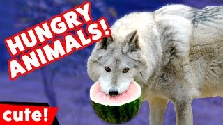 Download Funniest Hungry Pet Videos It's Feeding Time Compilation | Kyoot Animals Video