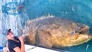 Download Operating Nurse Fishing For Monster Fish in Florida - Sharks and Goliath Grouper From Texas Video