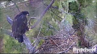 Download SWFL Eagles ~ E9 Branches to Spike Extension & Veranda First Time! 3.6.17 Video