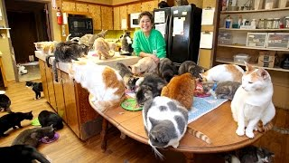 Download Ultimate Cat Lady: Woman Shares Her Home With 1,100 Felines Video