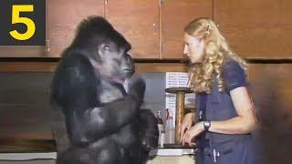 Download Top 5 Genius Monkeys Caught on Camera Video
