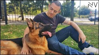 Download A Day With A German Shepherd Puppy | NerdVlog Video