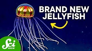 Download 8 Strange New Deep Sea Creatures Video
