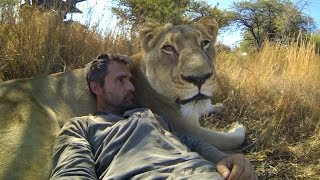 Download GoPro: Lions - The New Endangered Species? Video